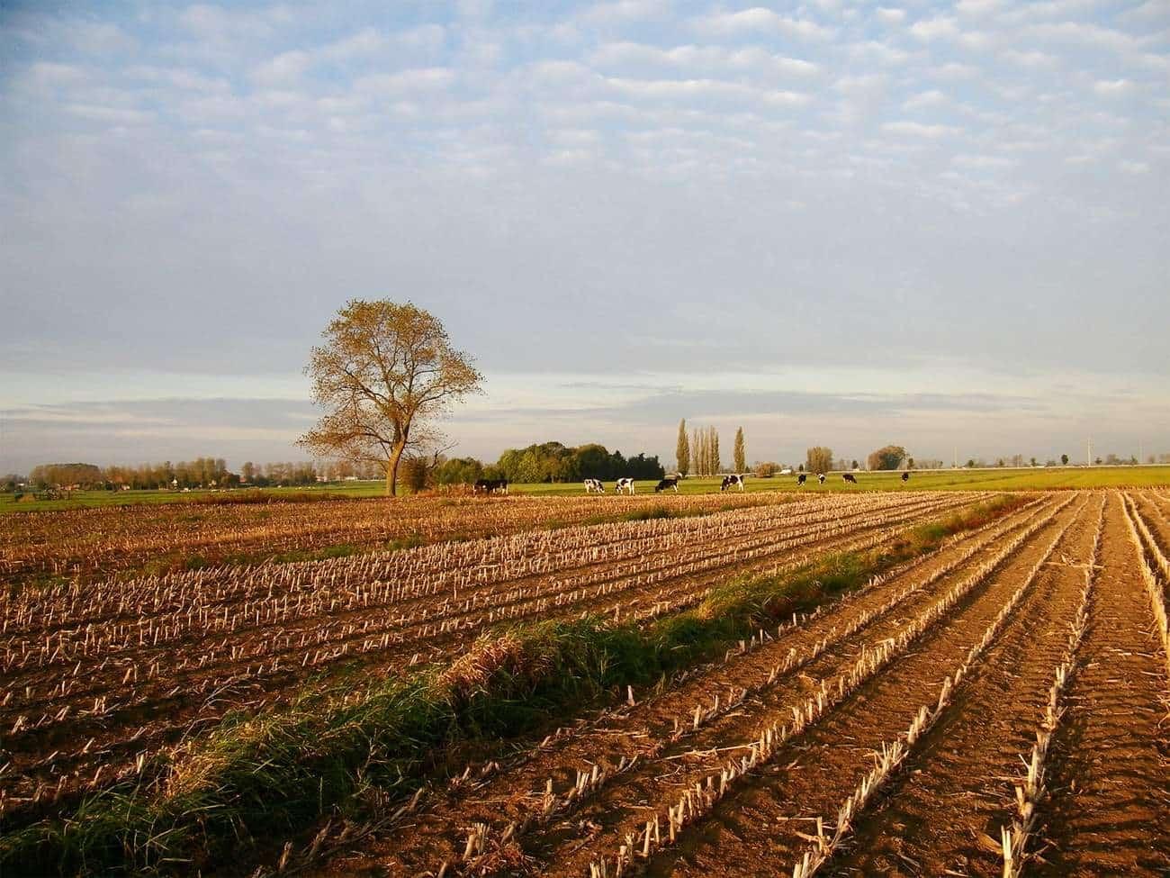 centrale deel van het plangebied ten noorden en oosten van de Hoogbloklandse weg (foto RAAP)